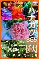 ハナカツ365 [秋] 10~12月