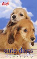 cute dogs29 ダックスフンド
