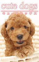 cute dogs01 トイプードル