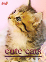 cute cats05 マンチカン