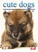 cute dogs04 柴犬