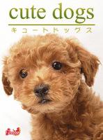 cute dogs10 トイプードル