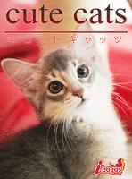 cute cats08 ソマリ