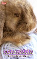 cute rabbits03 ミニロップ
