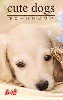 cute dogs27 ダックスフンド