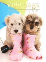 cute dogs20 ミニチュア・シュナウザー