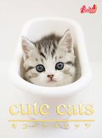 cute cats07 マンチカン