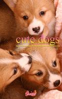 cute dogs34 ウェルシュ・コーギー