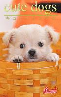 cute dogs16 チワワ