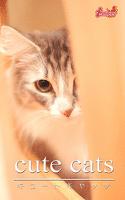 cute cats17 ノルウェージャンフォレストキャット