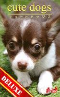 cute dogs DELUXE03 チワワ
