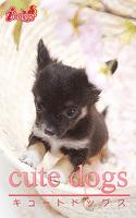 cute dogs17 チワワ
