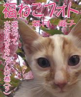 福ねこフォト~プニプニ猫にゃん 猫だってお花見するにゃんの巻(3)