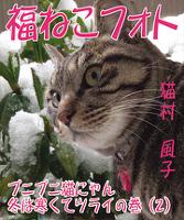 福ねこフォト~プニプニ猫にゃん 冬は寒くてツライの巻(2)