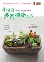 小さな多肉植物たち