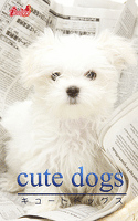cute dogs31 マルチーズ