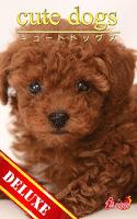 cute dogs DELUXE05 トイプードル