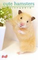 cute hamsters03 キンクマハムスター