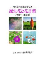 四枚組写真構成で見る誕生花と花言葉10~11月編