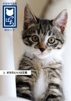 保護猫写真集 ねこっぱち! (1) #かわいいは正義